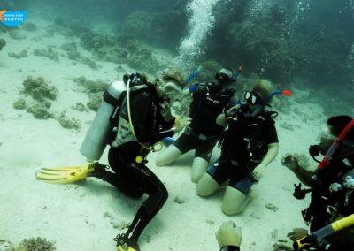 diving#star#oepn#water12