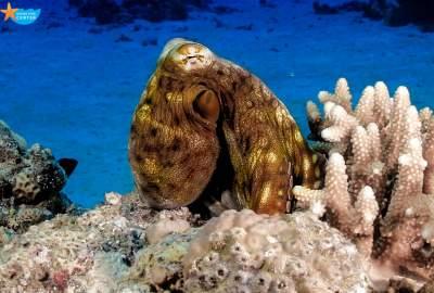 Octopus Diving Star Diving Center